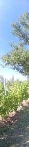 IMG_20150828_161343