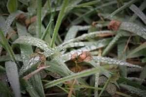 foto erba goccia inverno